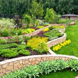 Plants to Fulfill Your Backyard Landscape All Year-Round